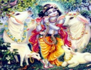 krishna with cows (2)