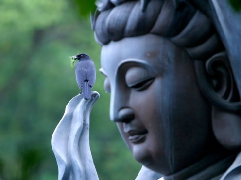 Kuan-Yin-and-Bird