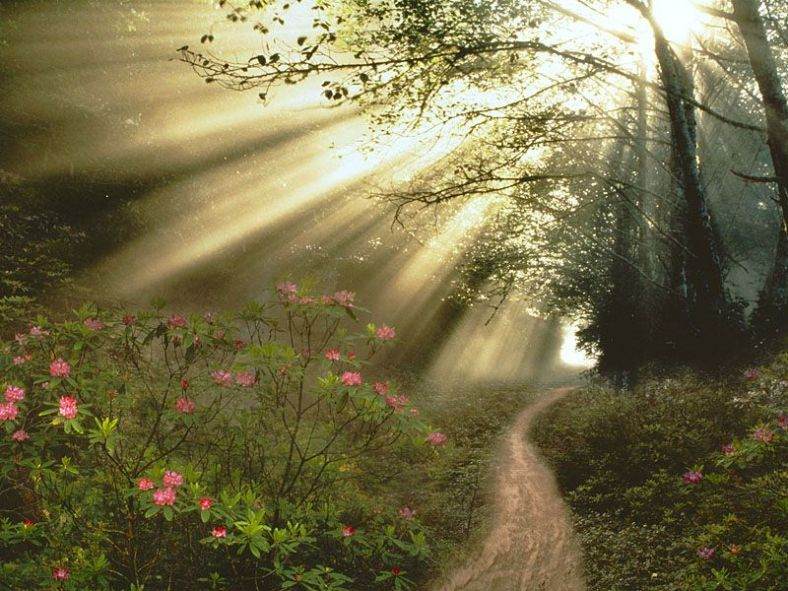 forestlight1