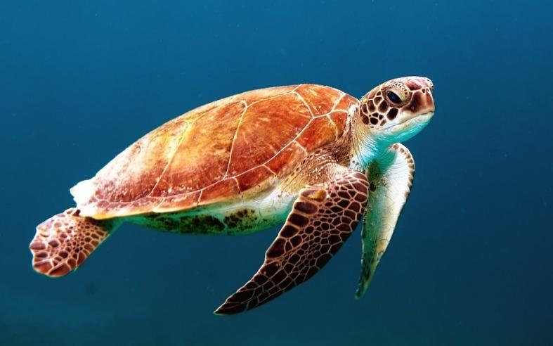 turtle-863336_960_720