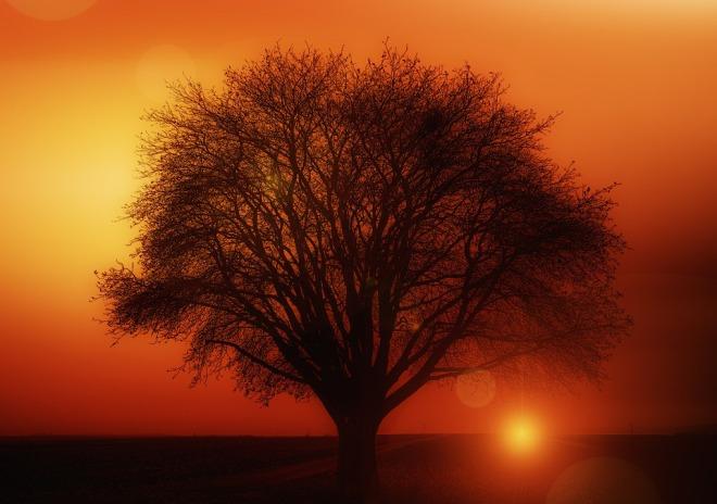 tree-117582_960_720