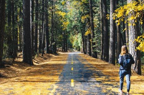 road-2598213_960_720