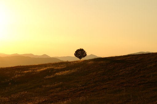 tree-189852__340