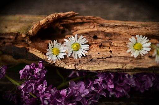 wood-1406895__340