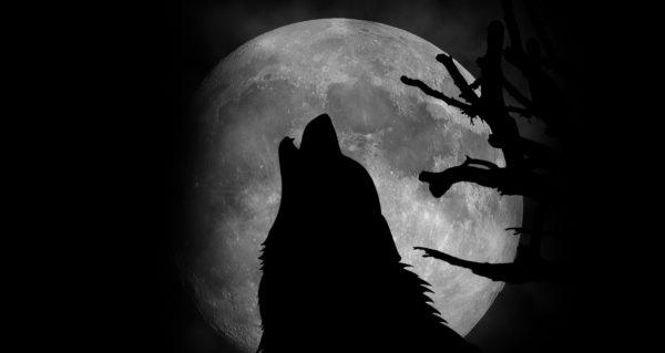 Full-Wolf-Moon-i639609648-600x319