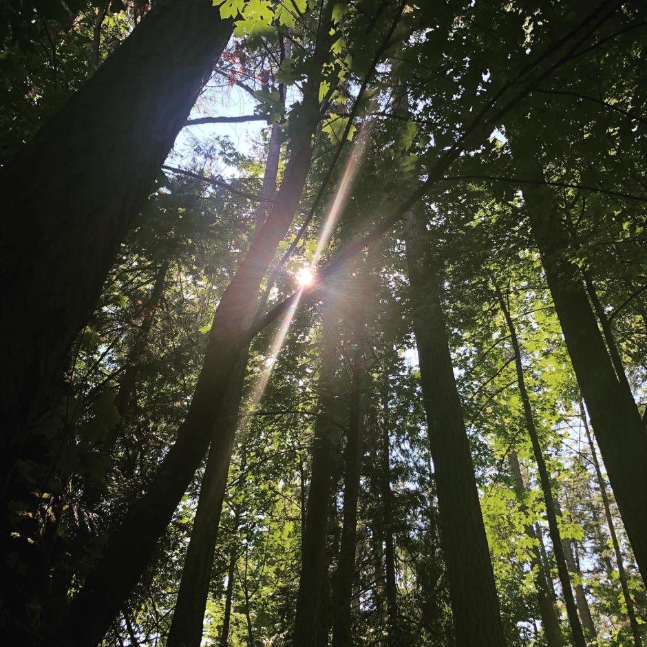 Absorvendo códigos de árvore para estabelecer o novo - SoulFullHeart Experience 6